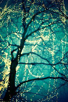 under the stars, tree, blue, night lights, color