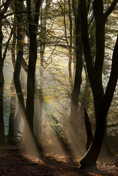 This image is so beyond words. The light playing on the trees, leaves, and forest floor so well done! Mystical light by hknatuurfoto (Hans Koster),