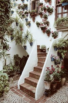 potted plants, stairway, garden walls, patio, garden stairs, container gardening, flower, wall planters, wall gardens