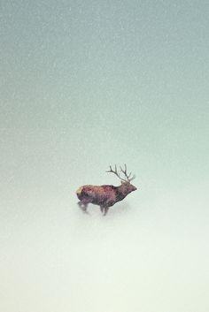 graphic, cerf, deftstep, bestiairec, elk, antlers, art, animalgaz, deer