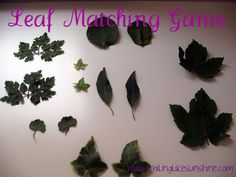 Encourage your preschoolers to explore God's creation with the leaf matching game.  Smiling like Sunshine: Leaf Matching Game