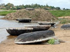 Coracles on the banks of the Cauvery River.
