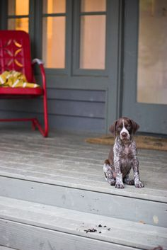 Pup on a porch