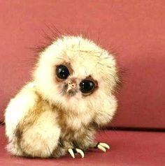 Baby owl.