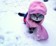 Keep your companion animals safe and warm as the temperature drops this winter