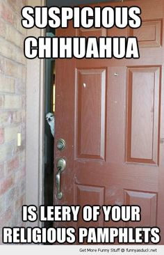 Perfect for my house! funny animals, the doors, chihuahuas, dogs, the face, funny pictures, funni, front doors, knock knock