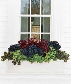 plant, windowbox, outdoor, flower decorations, windows