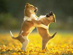 Las peleas entre cachorros hermanos