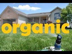 My step by step organic lawn treatment program that I use at my home. My lawn is a testament to what works!