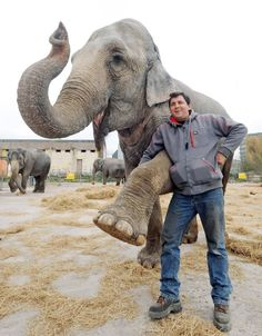 women elephants circus sad - Google Search