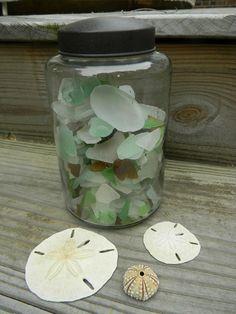 sea glass ... sea dollars