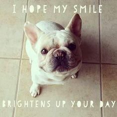 Frenchie Smile...