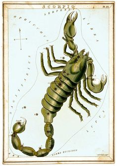 Scorpio Zodiac Sign Art Astrology Astronomy Constellation, get a free psychic reading here  http://www.astrologylove.net