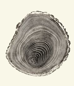 inside a tree. from woodcut, by bryan nash gill.