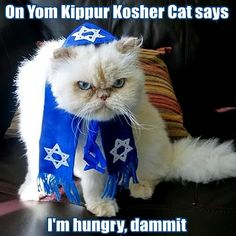 Yom Kippur Kitty