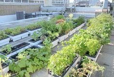 Community Garden Tips
