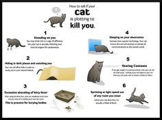 """How to tell if your cat is plotting to kill you."" Comic was created by Matthew Inman http://theoatmeal.com/"
