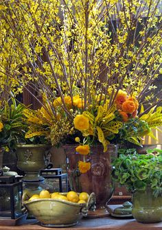 Anduze style urn filled with forsythia, ranunculus, croteus, tuberous begonia