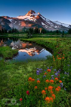 Jefferson Park Wilderness . Oregon
