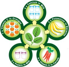 Moringa Oleifera Nutritional Content