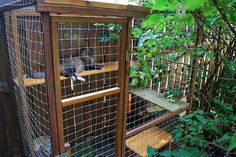 Make your garden pet-friendly ~ Cat enclosures so your kitties can enjoy the outdoors safely !