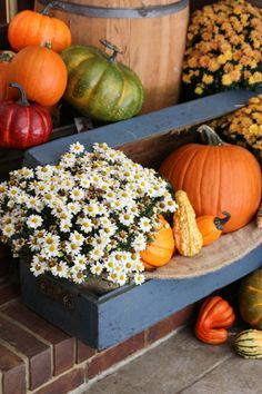 Fall Porch Decor with Plants and Pumpkins