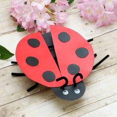 Cereal box lady bug