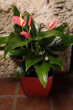 Hug Your Ficus: It's National Indoor Plant Week!