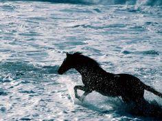 Horse in the ocean