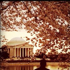 Washington DC blossoms