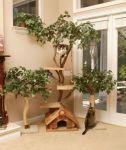 Cool Cat Trees!