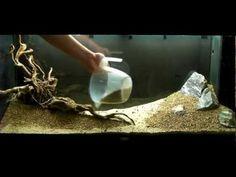 Aquarium Setup - Aquascape - Step by Step and Final Product - Live Planted Fish Tank