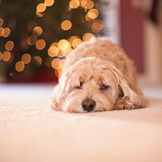 Here is a tutorial of how to take beautiful photos using Christmas lights.