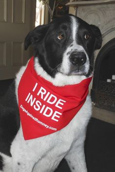 Thjs dog rides inside - like all dogs should. Mitt is mean. Grrr.