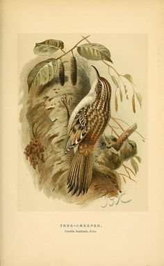 n234_w1150 by BioDivLibrary, via Flickr