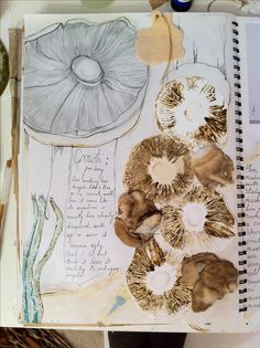 Textiles Student Sketchbook exploring Growth from Decay - observational drawings & mixed media mushroom studies // Connie Evans