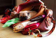 i want this puppy! louisvuitton, anim, louis vuitton, pug puppies, fashion styles, pugs, dog, lv bags, purses