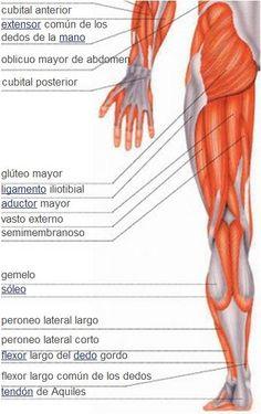Partes de cuerpo humano car interior design for Interior del cuerpo humano