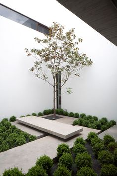 Small courtyard with tree and concrete slabs and bench. The Casa Ovalle Salinas by Jorge Figueroa Asociados