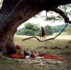 pic nic under the tree