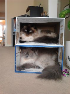 Who says cats can't have bunk beds?