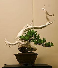 ~ <3 Bonsai Tree ~ Style ~