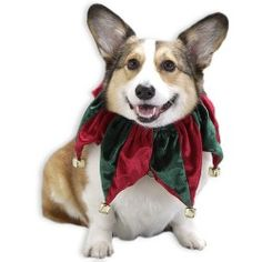 Christmas Safety Tips For Pets -  because All Star Baby Safety loves them too!