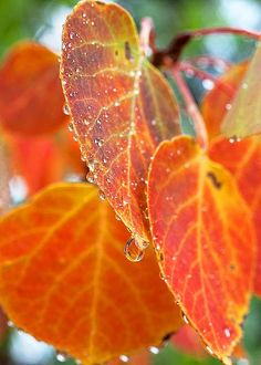 Leaves by Jim Garrison