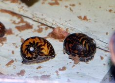 how to look feed your snail water