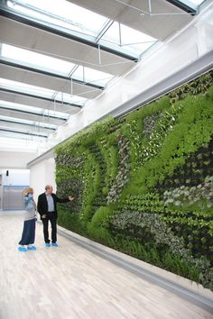 Green wall in an office building cafeteria