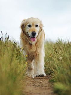 Know what to do when  #caring  for an  #elderly  #pet .