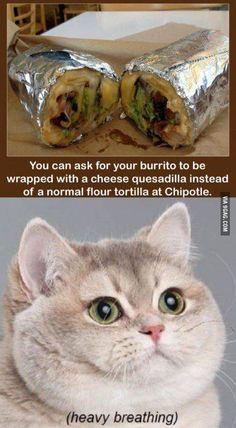 Chipotle Cat