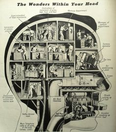 The Wonders Within Your Head