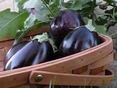 Growing eggplants in Arizona
